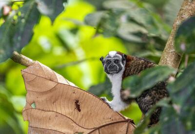 mono mirando a la cámara
