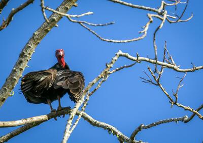 Gran pájaro en rama