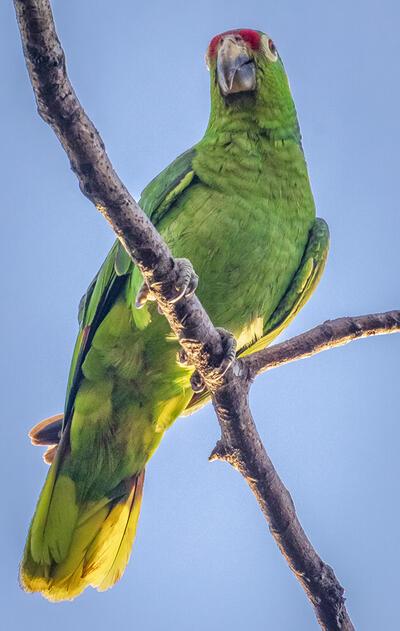 Pájaro verde en rama