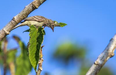 Pequeño pájaro en rama mediana