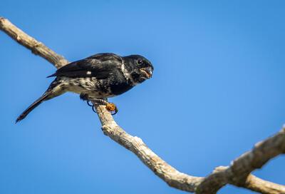 pequeño pájaro negro en rama