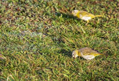 Más pájaros caminando