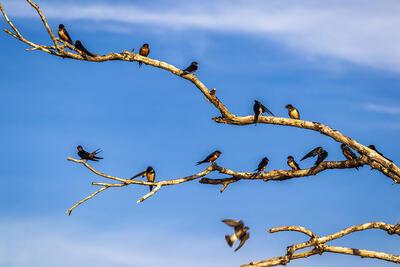 Un montón de pájaros en las ramas