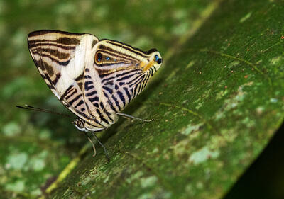 Mariposa en hoja