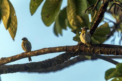 pájaro en rama