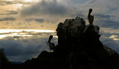 View of Surroundign Pelican