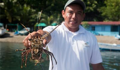 Artisan Fishing Lobster