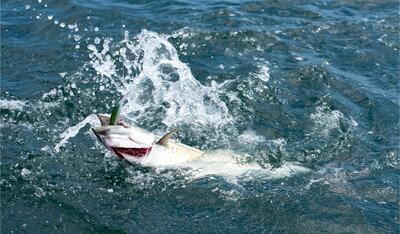 Sport Fishing Catch