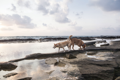 two dogs play on a beach