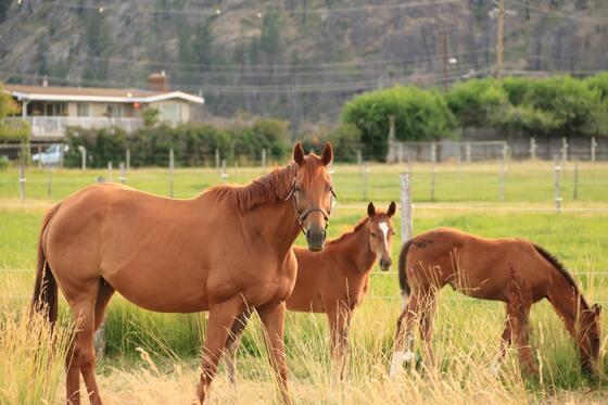 Culinary Garden Horses