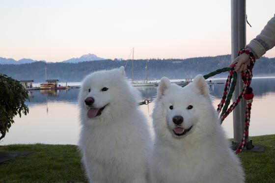 Dogs at the pet program in Alderbrook Resort