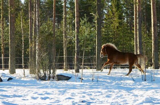 Activities at Northern Lights Village in Saariselkä, Lapland