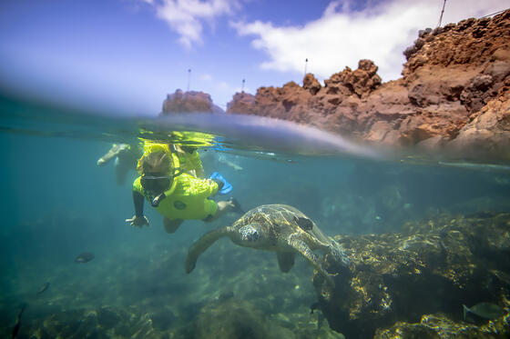 person snorkeling next to sea turtle