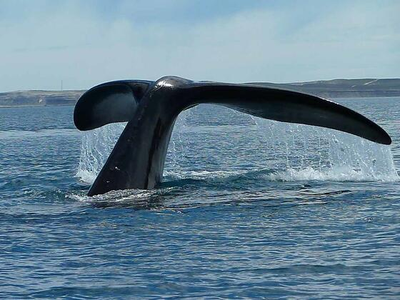 From Whale Watch - Whale Tail