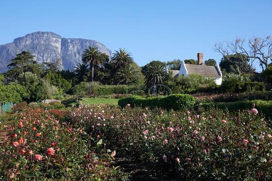 rose gardens at Chart Farm