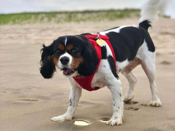 Dog-Friendly Amenities, The Roundtree, Amagansett, Hotel in Hamp