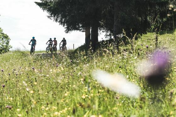 Radfahren rund um das Schloss