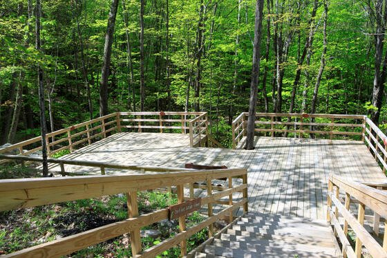 Stairs and wooden deck in woods