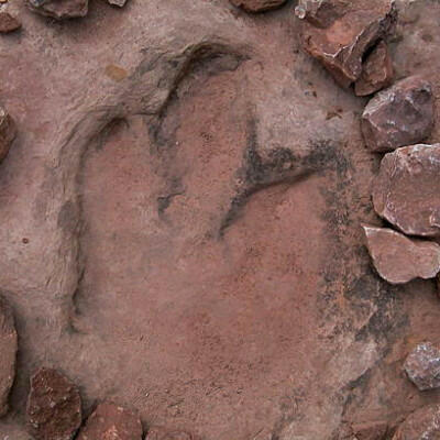 dinosaur track