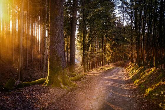 A path way which leads through a forest near Radisson Blu Badisc