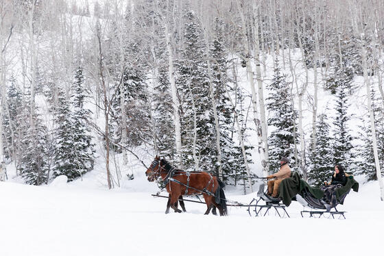 Winter Horse Drawn Sleigh Rides at Deer Valley Resort