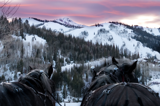 two horses facing a snow covered mountain