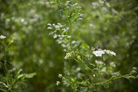 Plant near Buena Vista Del Rincon Eco Adventure Hotel And Spa