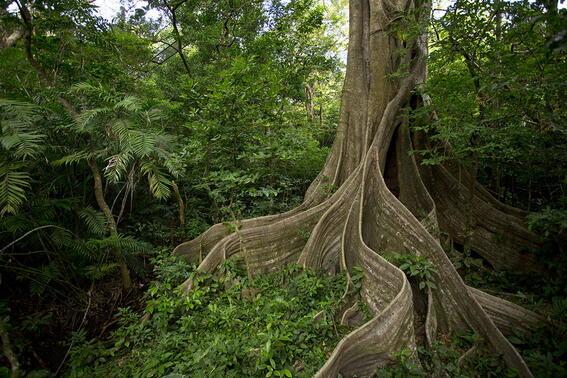 Forest near Buena Vista Del Rincon Eco Adventure Hotel And Spa