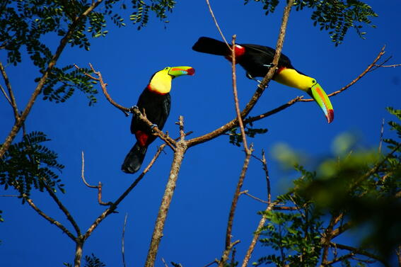 Birds near Buena Vista Del Rincon Eco Adventure Hotel And Spa