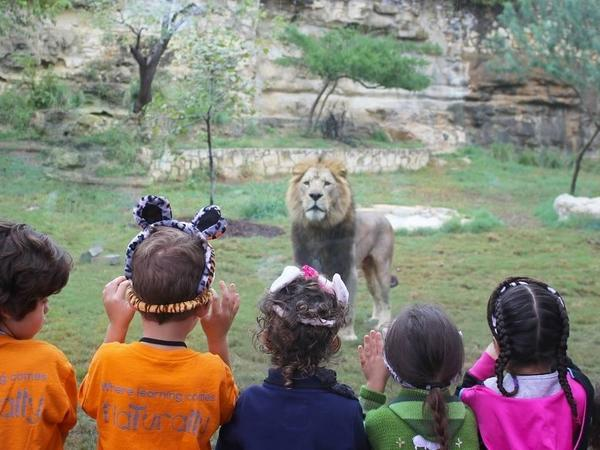 Children looking through glass at lion at the San Antonio zoo