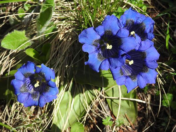 Fleures près de Les Gentianettes, The Originals Relais
