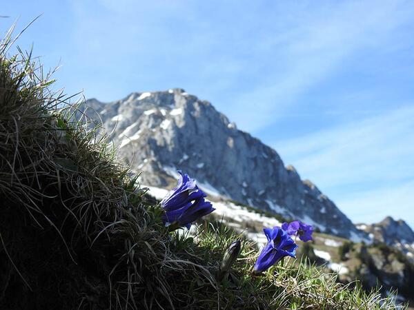 Montagnes près de Les Gentianettes, The Originals Relais