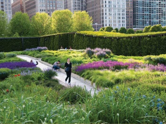 Woman walking through Lurie Garden