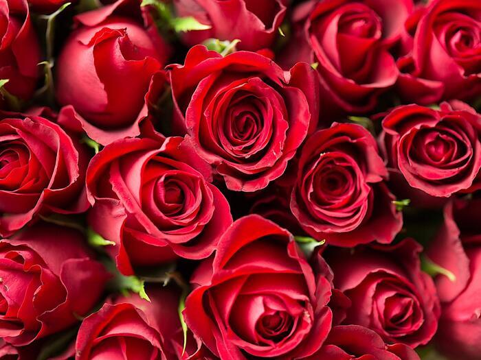 Valentines Day Offer at Romantik Hotel Schloss Pichlarn, Austria