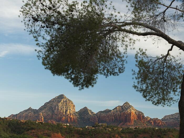Tree with Arizona canyons in the background.