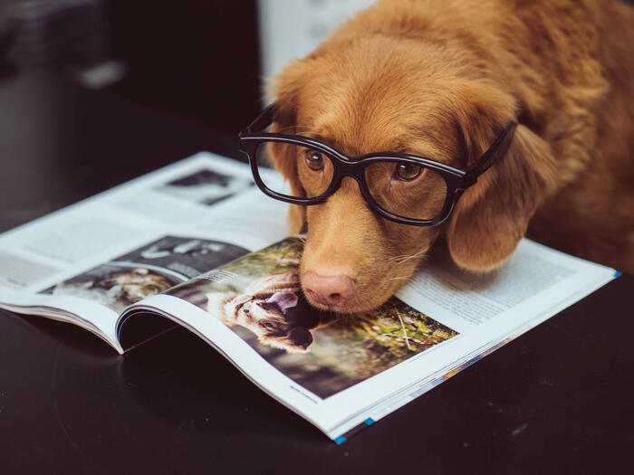 Dog wearing glasses and resting his chin on a magazine.