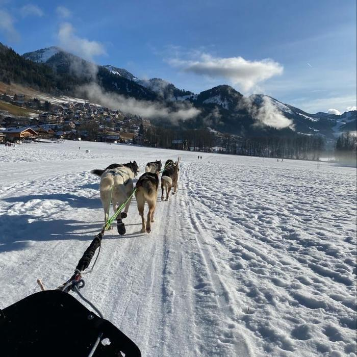 Prise d vue dans le traîneaux des chiens qui tirent sur la neige