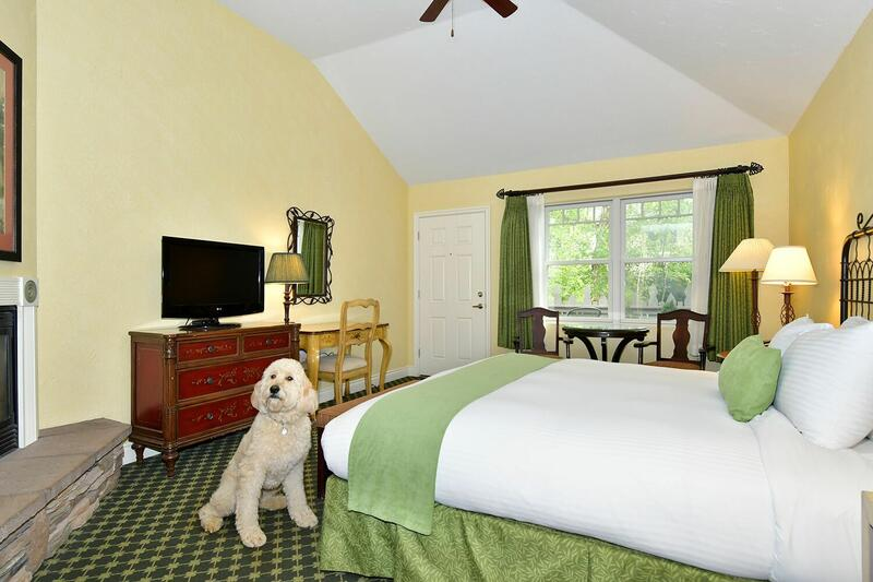 Pet-friendly hotel room with dog