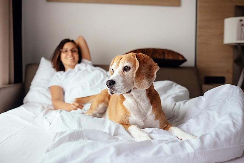 Woman and dog on bed