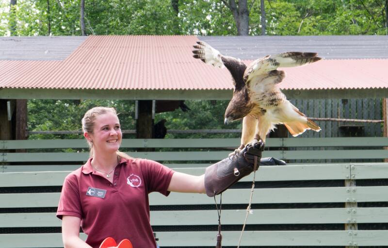 girl with hawk