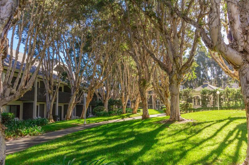 Trees in Carlsbad Courtyard