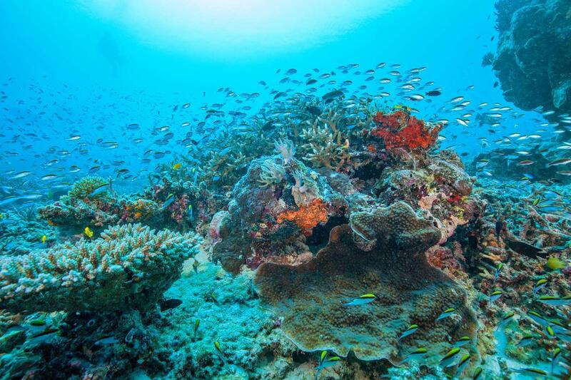 Activities near Heron Island Resort in Queensland, Australia