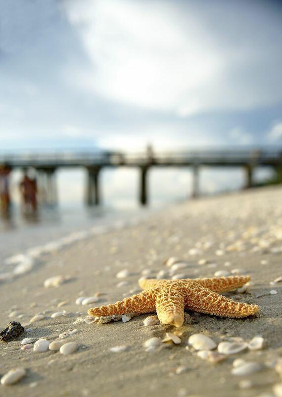 Starfish on beach.