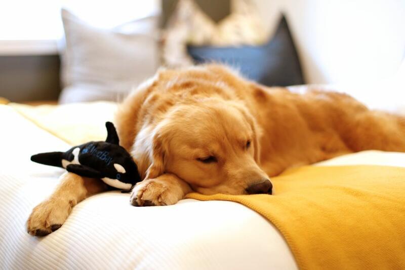 Beddog