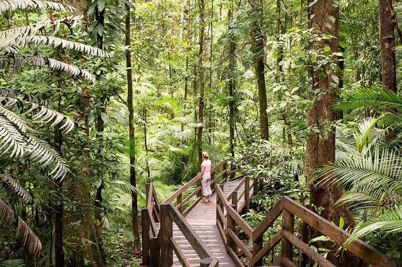 Daintree Forest near Silkari Port Douglas Hotel