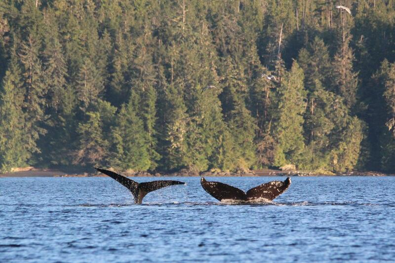 Whale tails fluke slapping.