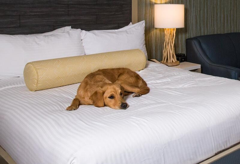 a dog laying on a bed