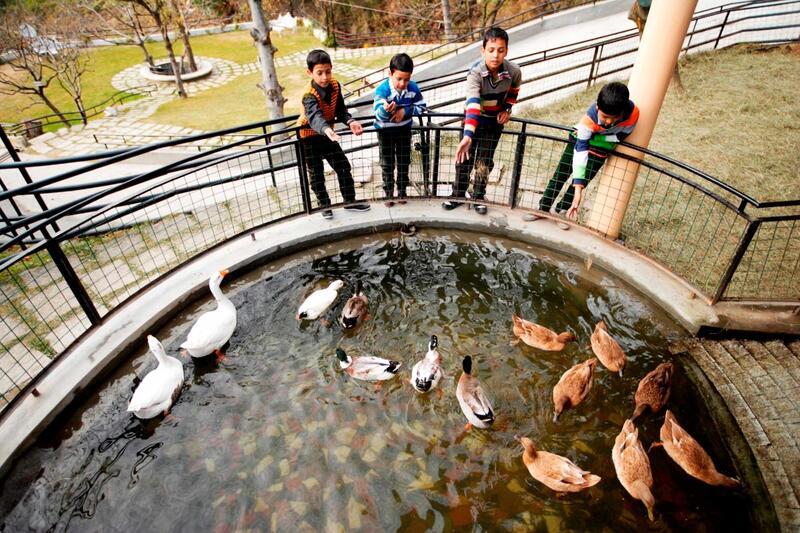Duck feeding at ManuAllaya Resort Spa Manali in Himachal Pradesh