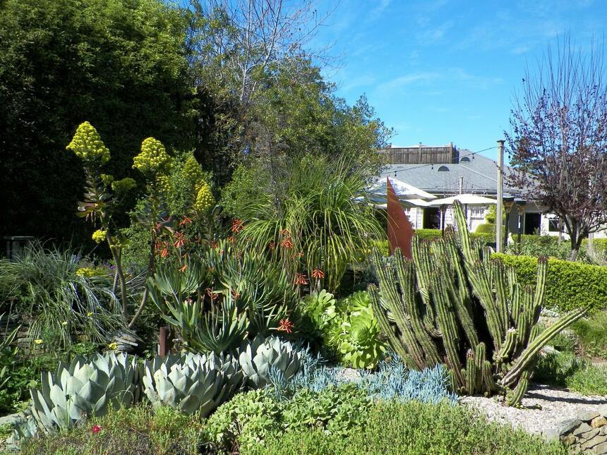 Garden with a cactus