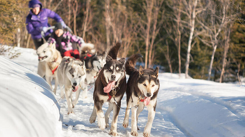 Auberge_lac_taureau_Dog_sledding_ride